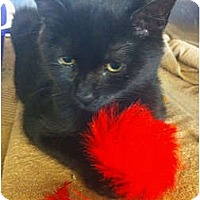 Adopt A Pet :: Larry - Secaucus, NJ