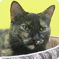 Adopt A Pet :: Tia - Mobile, AL