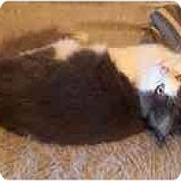 Adopt A Pet :: Cooper - Arlington, VA