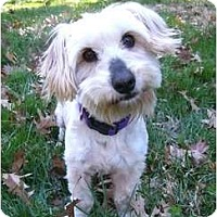 Adopt A Pet :: Hollyn - Mocksville, NC