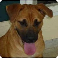 Adopt A Pet :: Sassy - Pointblank, TX
