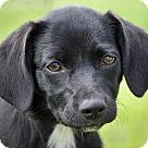 Adopt A Pet :: Sootie von Bohlen