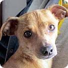 Adopt A Pet :: Doc