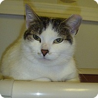 Adopt A Pet :: Lucie - Hamburg, NY