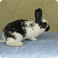Adopt A Pet :: Jo Jo - Bonita, CA