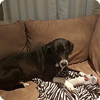 Adopt A Pet :: Lucky - Baden, PA
