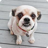 Adopt A Pet :: Touche - Smyrna, GA
