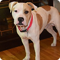 Adopt A Pet :: NINO - CHICAGO, IL