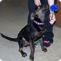 Adopt A Pet :: Knightly - Paris, IL