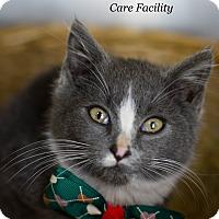 Adopt A Pet :: Dusty - Brockton, MA