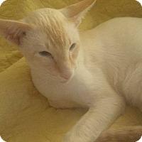 Adopt A Pet :: Sethos - Fairborn, OH