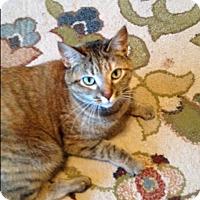 Adopt A Pet :: Poppy - EASLEY, SC