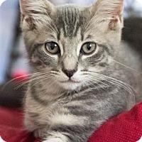 Adopt A Pet :: Ellie Mae - Pasadena, CA