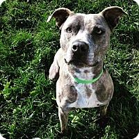 Adopt A Pet :: Kayto - Centerburg, OH