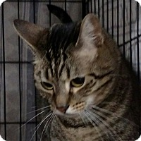 Adopt A Pet :: Charlie - Yuba City, CA