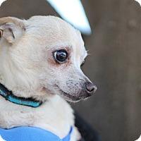 Adopt A Pet :: Atlas - Goleta, CA