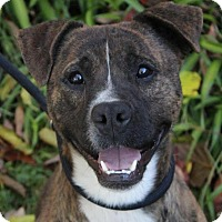 Adopt A Pet :: EDWARD - Red Bluff, CA