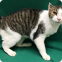 Adopt A Pet :: Kipp - Watauga, TX