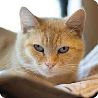 Adopt A Pet :: GINGER - Maumee, OH