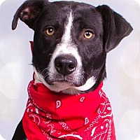 Border Collie Mix Dog for adoption in Pt. Richmond, California - LOUIE