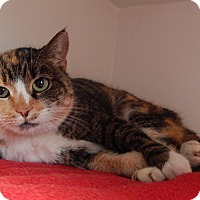 Adopt A Pet :: Buttercup - Newport, NC
