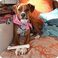 Adopt A Pet :: Brooklyn - Buffalo, NY