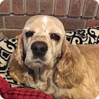 Adopt A Pet :: Holly - Santa Barbara, CA
