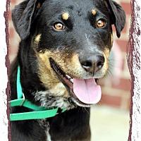 Adopt A Pet :: Devon - Griffin, GA