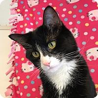 Adopt A Pet :: Sophie - Colorado Springs, CO