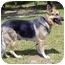 Photo 3 - German Shepherd Dog Dog for adoption in Pike Road, Alabama - Skye