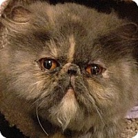 Adopt A Pet :: Jillian - Beverly Hills, CA