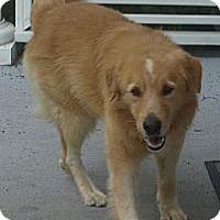Adopt A Pet :: RHETT - Jacksonville, FL