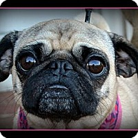 Adopt A Pet :: Rozie-VA - Suffolk, VA