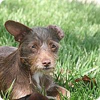 Adopt A Pet :: Thumper - Garden Grove, CA