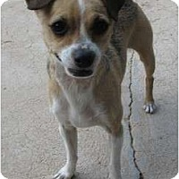 Adopt A Pet :: Peanut - Golden Valley, AZ