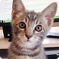 Adopt A Pet :: Todd - Irvine, CA