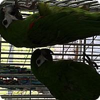 Adopt A Pet :: Rainman & Noodle - Punta Gorda, FL