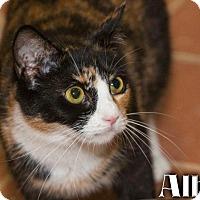 Adopt A Pet :: Alba - River Edge, NJ