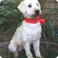 Adopt A Pet :: BENJI - Irvine, CA