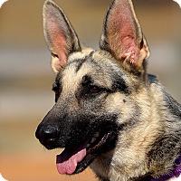 Adopt A Pet :: Athena - Dacula, GA