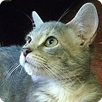 Adopt A Pet :: Lolita - Fairbury, NE