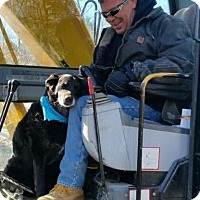 Adopt A Pet :: Tank - Hollis, ME