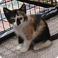 Adopt A Pet :: Patches - bloomfield, NJ