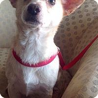 Adopt A Pet :: Tim - Phoenix, AZ