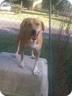 Labrador Retriever/Husky Mix Dog for adoption in Hayden, Alabama - Little Girl