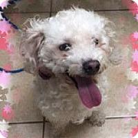 Adopt A Pet :: Adopted!!Crumpet - MI - Tulsa, OK