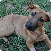 Adopt A Pet :: Banjo - Austin, TX
