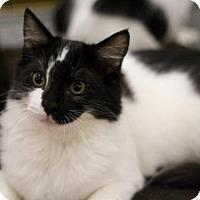 Adopt A Pet :: Coconut - Sacramento, CA