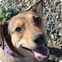 Adopt A Pet :: Elby - Tucson, AZ