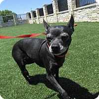Adopt A Pet :: Bailey - North Richland Hills, TX